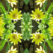 Green and yellow flower art